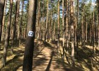Biķernieku trases mežā atklāta skriešanas taka