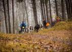 Novembra sākumā Ikšķilē norisināsies Pasaules kausa posms kamanu suņu sportā (video)