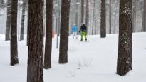 Bauda slēpot Mežaparkā