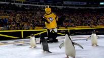 """Pirms """"Penguins"""" mājas spēles uz ledus iznāk īsti pingvīni"""