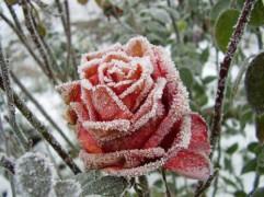20 iemesli, kuru dēļ ir vērts iemīlēt ziemu