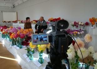 """Video: """"Pērkot importu, mēs savu ekonomiku nebalstām"""": intervija ar dāliju audzētāju Aivaru Baroniņu"""