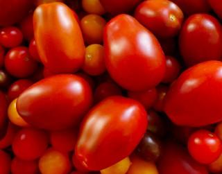 Latvijas Dabas muzejā norisināsies tradicionālā tomātu izstāde