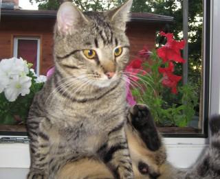 Vārdošana- lai pazudis kaķis atgrieztos mājās