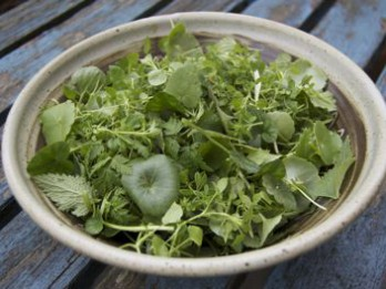 Salāti no savvaļas augu lapām
