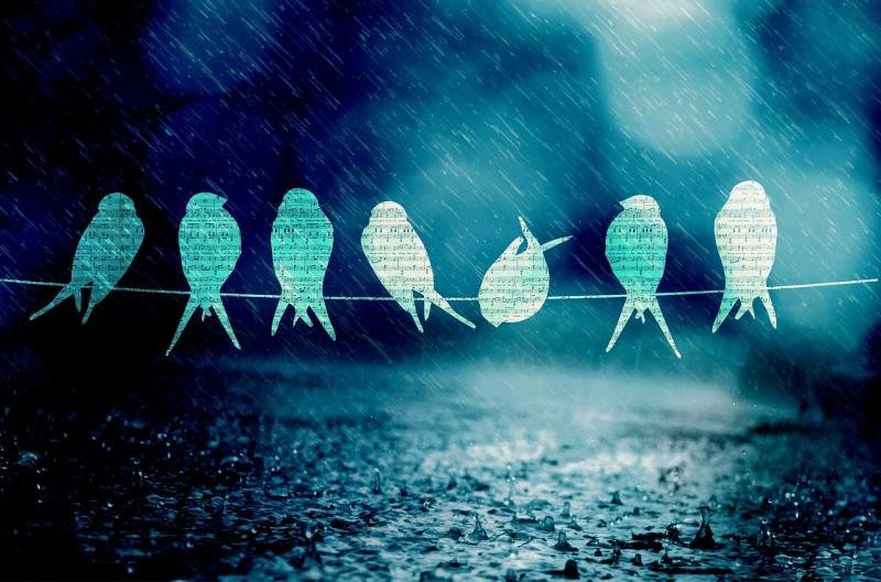 Ar putnu balsīm ieskandinām jaunu pasākumu ciklu: Dabas akadēmija