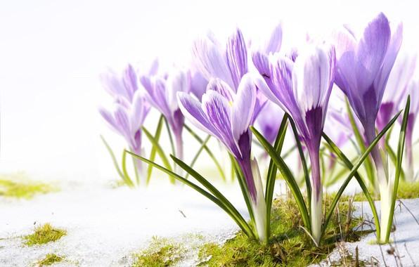 Tava vārda skaidrojums un ietekme uz tavu likteni. 28. marts - Ginta, Gunta, Gunda