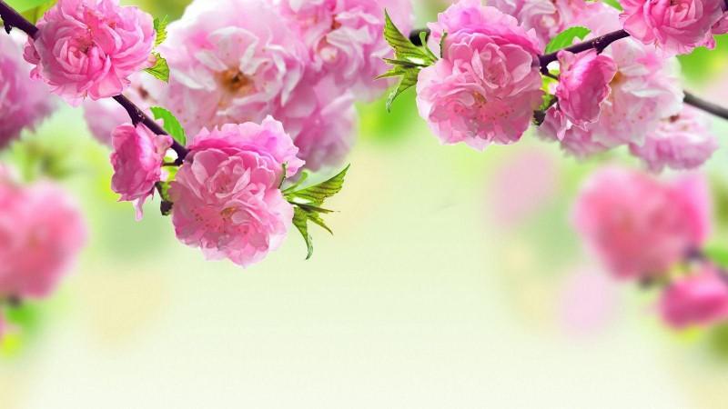 Tava vārda skaidrojums un ietekme uz tavu likteni. 10. aprīlis - Anita, Anitra, Annika, Zīle