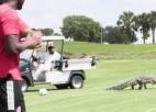 Video: Aligators apmeklē futbolistu treniņu un dodas laukumā