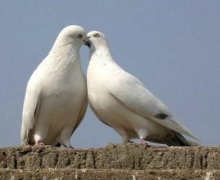 Pamēģini dzīvot mīlestībā un tev tas iepatiksies!