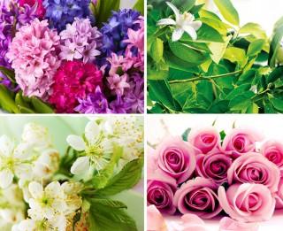 Kādi ziedi no ORANGERIE līnijas piemēroti tev? Veic testu un uzzini!