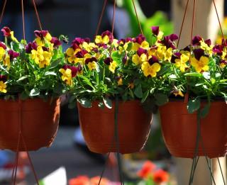 """Aicināti pieteikt dalību dārzkopju svētkiem  """"Pavasaris ziedos"""""""