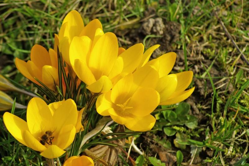 Vārdu skaidrojums. 26. marts – Eiženija, Ženija